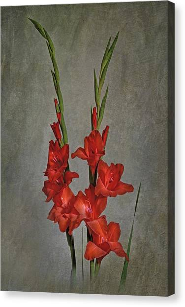 Gladiolus I Canvas Print