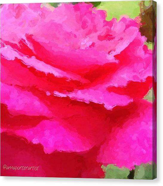 Red Roses Canvas Print - Glazed Bright Pink And Red Rose by Anna Porter