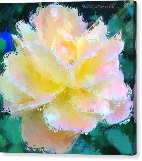 Impressionism Canvas Print - Glazed Pale Pink And Yellow Rose  by Anna Porter