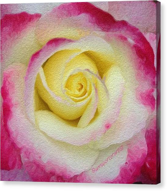 Red Roses Canvas Print - Glazed Red-tipped Rose by Anna Porter