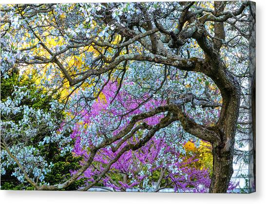 Glen Magna Bloom Canvas Print
