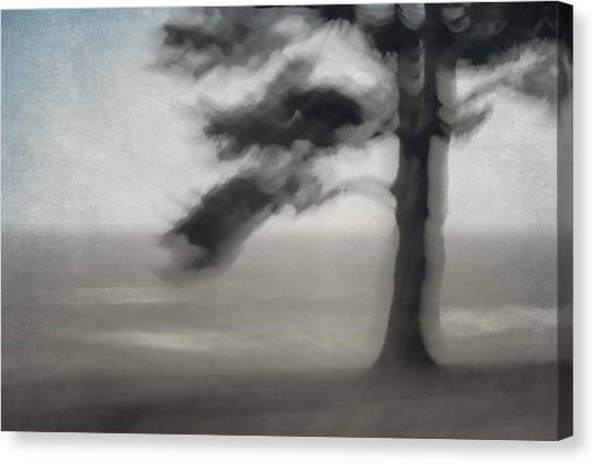 Soft Focus Canvas Print - Glimpse Of Coastal Pine by Carol Leigh