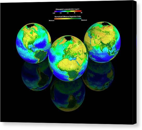 Phytoplankton Canvas Print - Global Chlorophyll Distribution by Carlos Clarivan