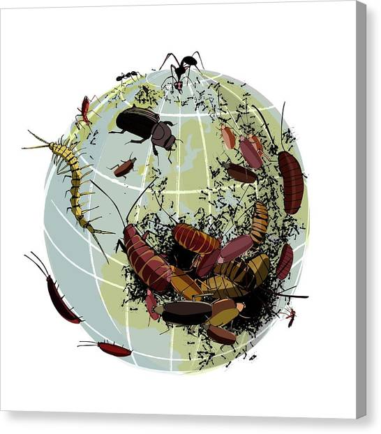 Centipedes Canvas Print - Global Insect Plague by Sharpenson Ltd/science Photo Library