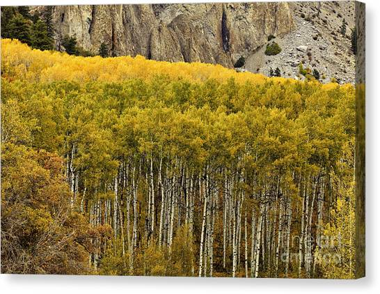 Glorious Canopy Canvas Print
