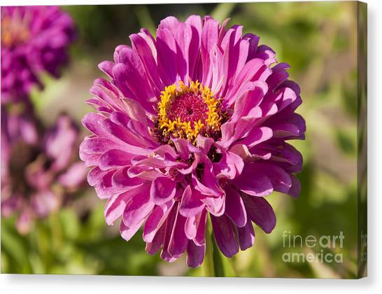 Glorious Flower Canvas Print