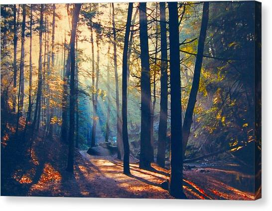 Glorious Forest Morning Canvas Print