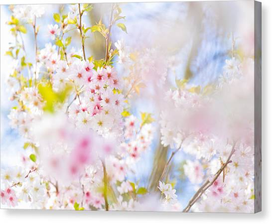 Glory Of Spring Canvas Print