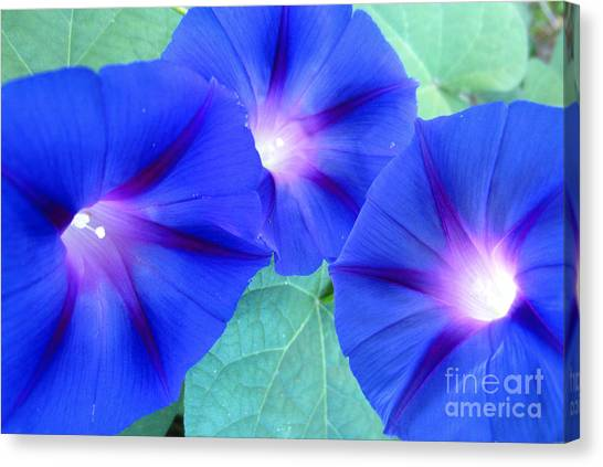 Glory Of The Morning Trio Canvas Print