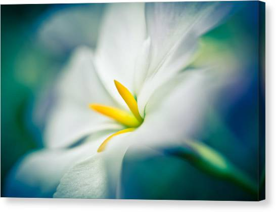Canvas Print featuring the photograph Glory Of The Sun by Priya Ghose