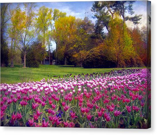Glory Of Tulips Canvas Print