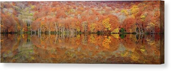 Panorama Canvas Print - Glowing Autumn by Sho Shibata