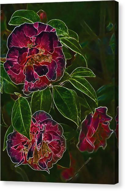 Glowing Camellia Canvas Print