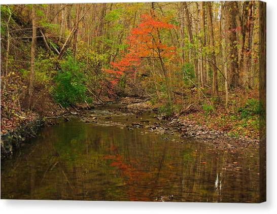 Glowing Fall Canvas Print