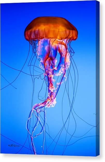 Glowing Jellyfish Canvas Print