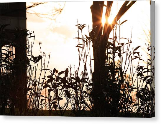 Glowing Landscape Canvas Print