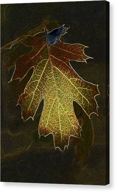 Glowing Leaf Canvas Print