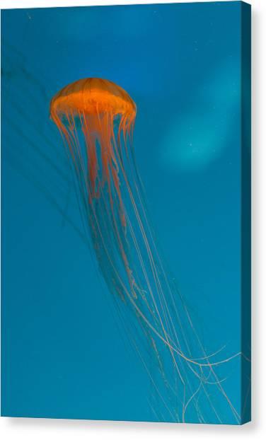 Glowing Orange Sea Nettle Canvas Print