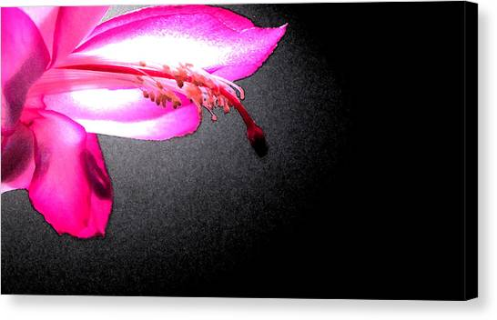 Glowing Pink Canvas Print by Mary Bedy