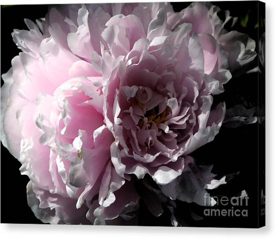 Canvas Print - Glowing Pink Peony by Christiane Schulze Art And Photography