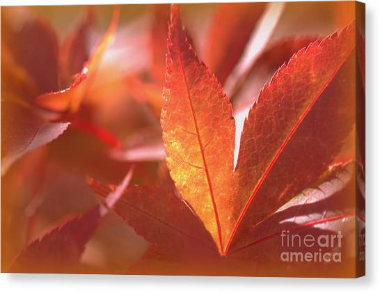 Glowing Red Leaves Canvas Print