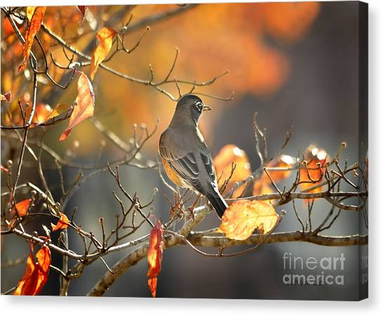 Glowing Robin 2 Canvas Print