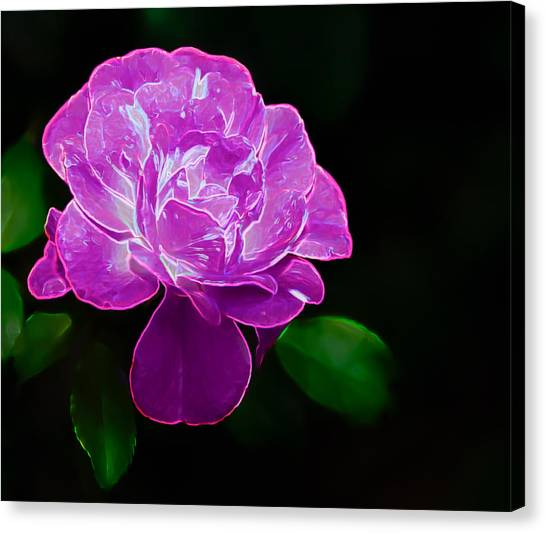 Glowing Rose II Canvas Print