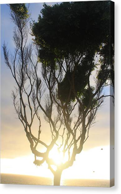 Glowing Tree Canvas Print