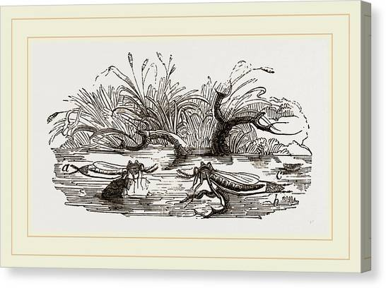 Gnats Canvas Print - Gnats Forming A Raft Of Eggs by Litz Collection