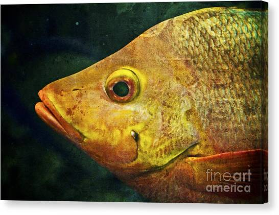 Go Fish Canvas Print by Pam Vick