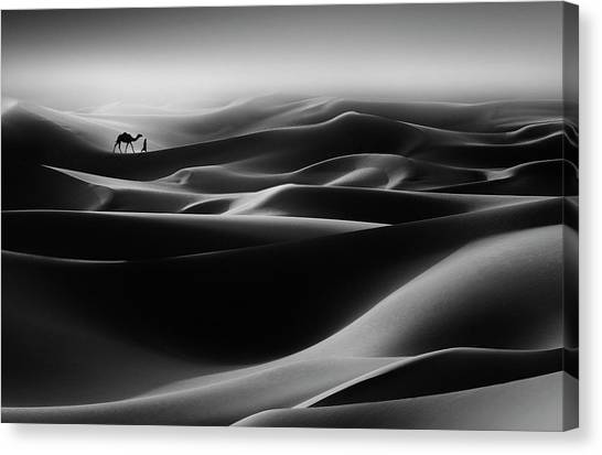 Camels Canvas Print - Go Home by Nidhal Alsalmi
