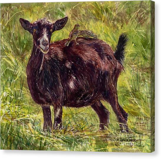 Goat Piggybackers Canvas Print