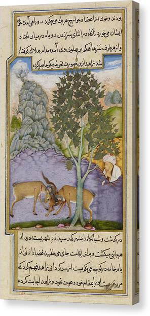Fabled Canvas Print - Goats Crushing A Fox by British Library