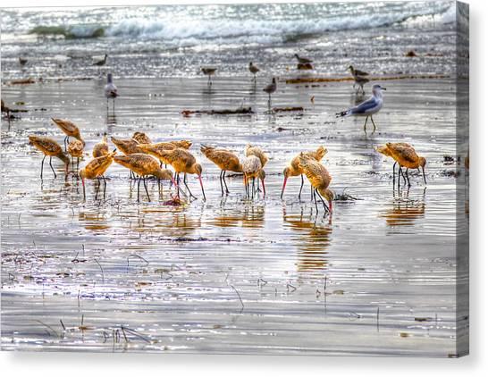 Godwits At San Elijo Beach Canvas Print