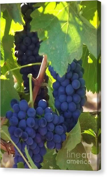 Golan Grapes Canvas Print