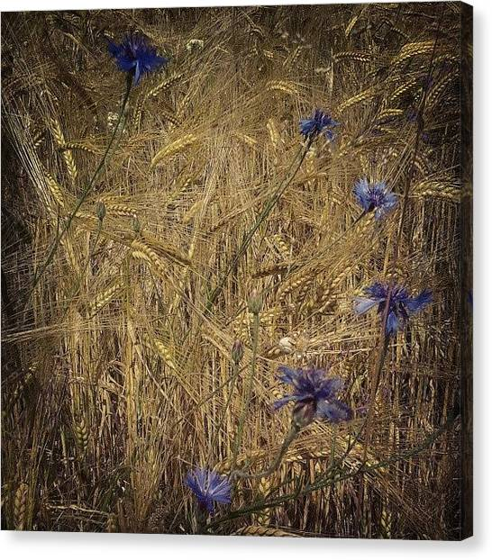 Colorful Canvas Print - Gold And Blue by Emanuela Carratoni