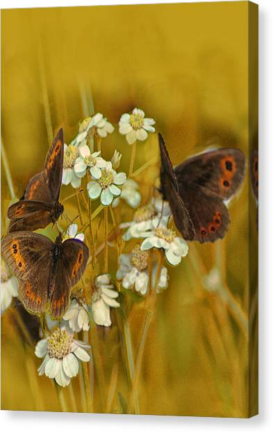Gold And Brown Canvas Print