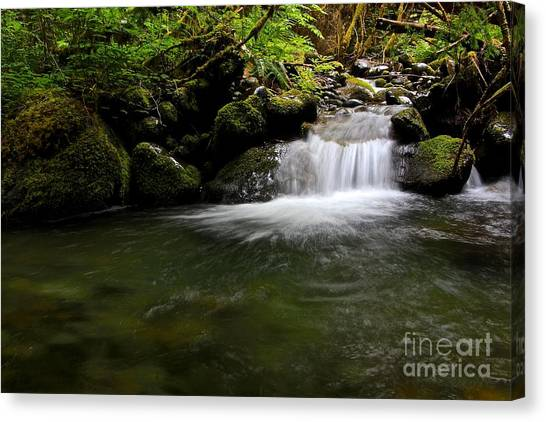 Gold Creek  Canvas Print by Tim Rice