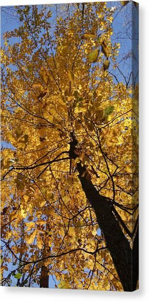 Gold Canvas Print by Doug Hubbard