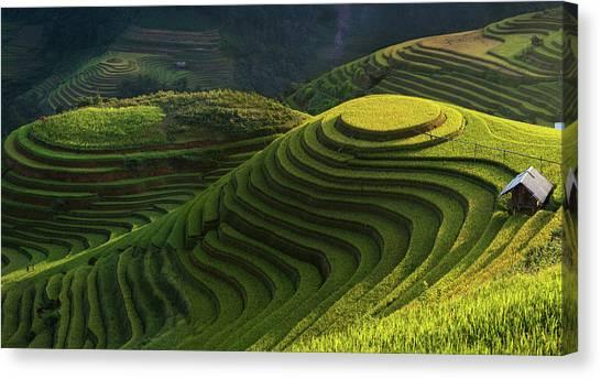 Vietnamese Canvas Print - Gold Rice Terrace In Mu Cang Chai,vietnam. by Artistname