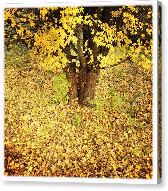Autumn Leaves Canvas Print - Golden And Yellow Autumn Leaves by Matthias Hauser
