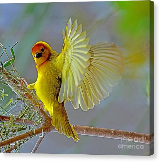 Golden Angel Canvas Print