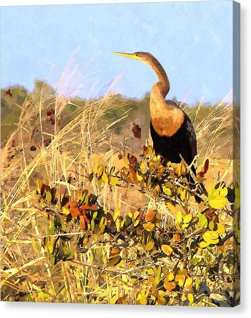 Anhinga Canvas Print - Golden Anhinga by John Samsen