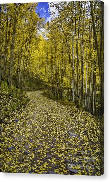 Golden Aspen Road Canvas Print