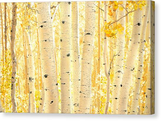 Golden Aspens Utah Canvas Print