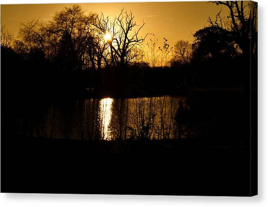 Golden Brown Canvas Print by Dave Woodbridge