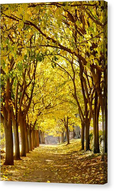 Golden Canopy Canvas Print