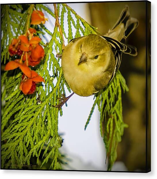 Finch Canvas Print - Golden Christmas Finch by LeeAnn McLaneGoetz McLaneGoetzStudioLLCcom
