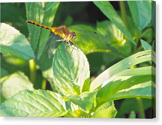 Golden Dragonfly On Mint Canvas Print