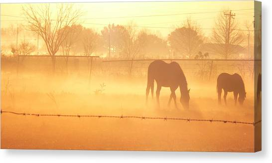 Golden Forage Canvas Print